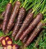 Las semillas de zanahoria púrpura cósmicos extra dulces Gourmet gran mercado o en el hogar Jardineros (100)