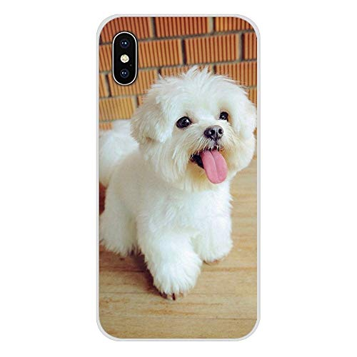 HUAI For Apple iPhone X XR XS 11Pro MAX 4S 5S 5C SE 6S 7 8 Incluyen un iPod 5 6 Cachorros de Perro maltés Blanco Cubiertas Transparente Shell TPU (Color : Images 8, Material : For iPhone 8 Plus)
