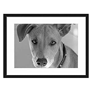 Wood Framed Canvas Artwork Home Decore Wall Art (Black White 20x14 inch) - Dog Young Dog Head Small Dog Cute Brown Africanis 30
