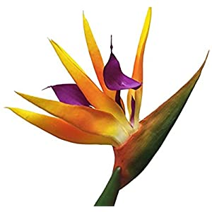 AMERIQUE Gorgeous Pack Of Four (4) 31.5″ Real Touch Bird Of Paradise Artificial Silk Flower Sprays, Feel Real Tech, Large Permanent Flower, Super Quality, 4 Pieces
