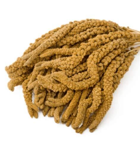 Eurital Kolbenhirse 1 kg gelb - für Kanarien, Wellensittiche, Vögel und Hühner