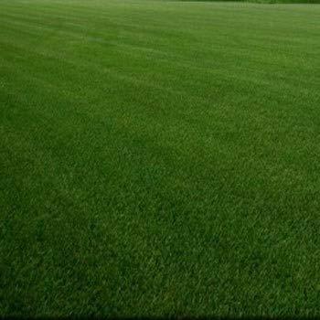 Outsidepride SPF-30 Heat & Drought Tolerant Hybrid Bluegrass Lawn Grass Seed - 5 LBS