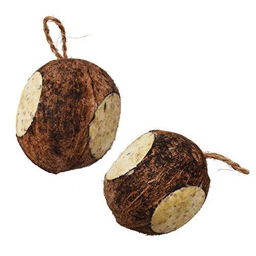 Lyra Pet® 2 x 4 Stück ganze Kokosnuss mit 3 Löchern gefüllt Vogelfutter Wildvögel
