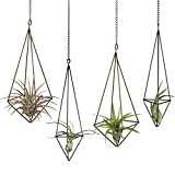Dahey Hanging Air Plant Holder- 4 Pack, 2 Sizes Metal Airplant Rack Tillandsia Hanger Display Himmeli Gemometric Planter with Chains Rustic Home Decor, Bronze