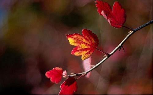 Tak met rode bladeren De op nummers schilderen DIY uniek