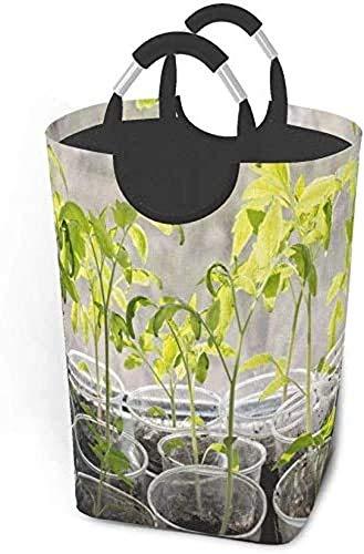 XCNGG Plántulas Tomate en Vasos de plástico Cesta de lavandería Plegable Bolsa Grande para Dormitorio, baño, guardería para bebés, Organizador de Juguetes