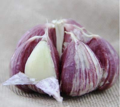 Elitely 35 Stücke Seltene Knoblauch Bio Rot & Amp; Black Knoblauch Samen Zwiebel Knoblauch Gemüsesamen Küche Gewürz Für Gard: Sky Blue