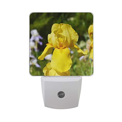 AOTISO Golden Iris Flower Grow in Garden Tiempo de primavera Fondo de la naturaleza Sensor automático Luz nocturna Plug in Interior