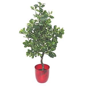 Planta Artificial de Geranio (Polyscias Guilfoylei) de 102 cm, Maceta de plástico Negro, Verde Aralia