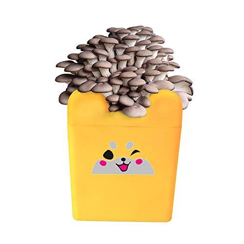 Ledph Kit De Cultivo Setas, Cultivo De Hongos Kit Interior, Kits De Planta De Mini ChampiñOnes para Principiantes, Cultivar Setas En Casa, Esporas Mycelium Spawn Bonsai,Amarillo,ji Mushroom