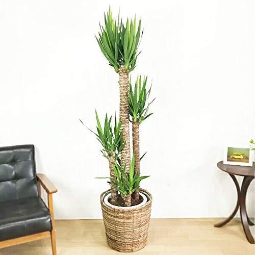 大鉢用10号鉢用インテリアカバー手作りハンドメイド観葉植物おしゃれインテリア