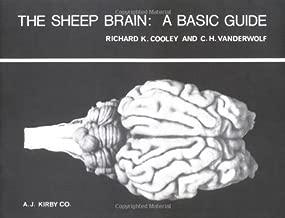 The Sheep Brain: A Basic Guide