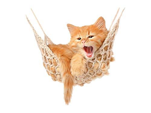 GRAZDesign Wandtattoo Baby Katze, Babykatzen auf Hängematte, Kinderzimmer Wandaufkleber / 41x40cm