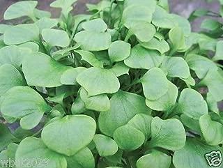 Best claytonia perfoliata seeds Reviews
