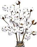 Ruiuzioong Tallos de algodón seco Natural, Estilo Granja, Flores Artificiales,...
