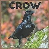 Crow 2022 Calendar: Official Crow Birds 2022 Calendar 16 Months