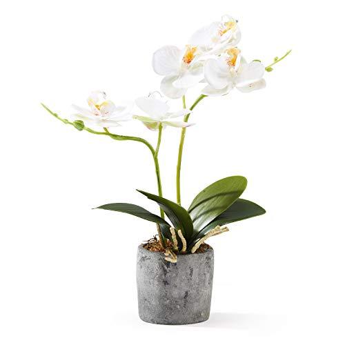 mini orchidee lidl