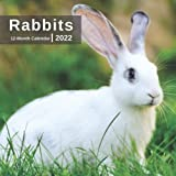 Rabbits Calendar 2022 - 12 Months of High-Resolution Rabbit Photos Including Official Holiday Prompts - US/UK/CA