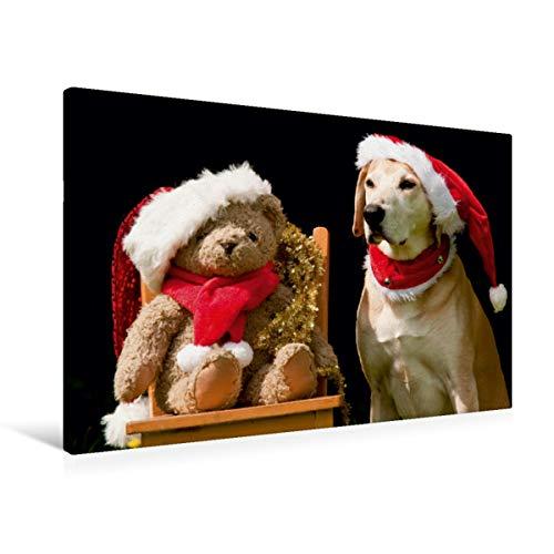 Calvendo Premium Textil-Leinwand 90 cm x 60 cm Quer, Frohe Weihnachten!   Wandbild, Bild auf Keilrahmen, Fertigbild auf Echter Leinwand, Leinwanddruck: Azawakh-Ridgeback mit Teddy Tiere Tiere