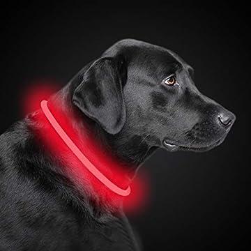 [EINE GRÖSSE PASST FÜR ALLE] - Das LED-Hundehalsband kann manuell auf Halsgrößen von 20cm - 70cm / 7.9inch - 27.5inch zugeschnitten werden. [ULTIMATIVE SICHTBARKEIT] - Das 360-Grad-Hundehalsband lässt Ihren Welpen nicht länger zu einem albernen Halbh...
