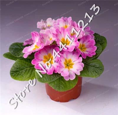 SANHOC 200 Stück Echtnachtkerze Europa Primel malacoides Farbe Bonsai Blume wachsen in Töpfen Zimmerpflanze Einfach für Hausgarten mischen: 5