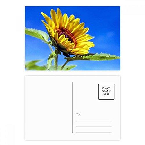 DIYthinker Sonnenblumen-blauer Himmel Sonnenschein-Blumen-Postkarten-Set Geburtstag dankt Karte Mailing Side 20pcs 5.7 Zoll x 3.8 Zoll Mehrfarbig