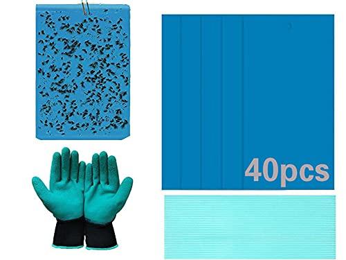 Amlan Trampas Insectos,Papeles Pegajosos Doble Cara Azul de Moscas,Tabla Adhesiva para Plantas voladoras, Insectos, Hojas y Lazos(Moscas,Piojos,Trips,Insectos),40Pcs(20Pcs 8x6In,20Pcs 6x4In)
