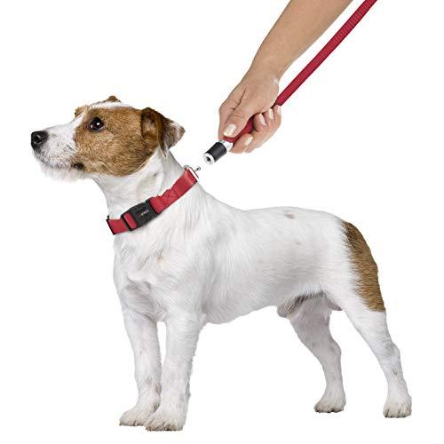 GOLEYGO Hundeleine & Halsband, rot, Größe S (29-43 cm Halsumfang) | innovatives Magnet-klick-System mit Kugelstift, unter Vollast lösbar | für Hunde bis max. 40 kg | Leinenlänge 120-200cm