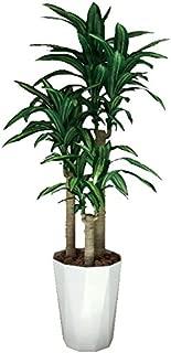光触媒 人工観葉植物 光の楽園 幸福の木 1.6m 400A300