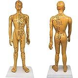HYRL Modelo de acupuntura, Modelo de anatomía del Cuerpo Humano Masculino, meridianos Transparentes de Color Cobre y Modelo de acupuntura para Regalos de decoración, 50 cm / 19,6 Pulgadas