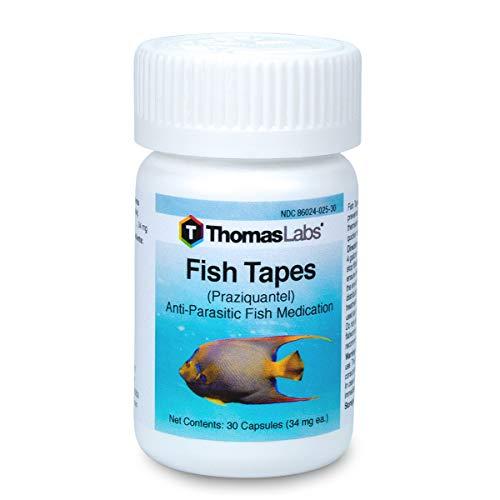 effexor xr norepinephrine dosage