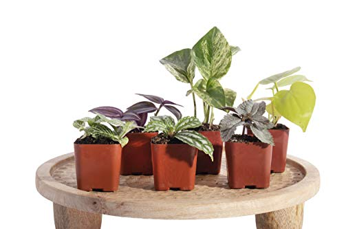 Leaf & Linen | Classic Collection 6-Pack 2″ Assorted House Plants-Live Indoor/Outdoor Home and Office Décor Beginner Friendly, Set of 6,
