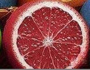 VISTARIC 8: Livraison gratuite un colis de 50 Pcs Citrus limon Graines Fruit Jardin Terrasse verger à graines Ferme famille Bonsai Lemon Seed Potted 8