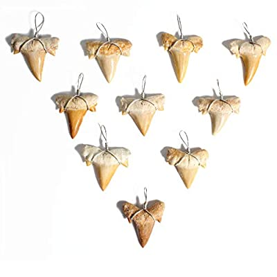 Wire Wrapped Fossilized Shark Teeth for Necklace - Shark Tooth Necklace Charm Pendant