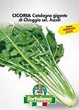 Foglie di colore verde scuro, allungate e poco frastagliate. Coste larghe e bianche, cespo pesante e voluminoso. Ottima resistenza alla salita a seme.