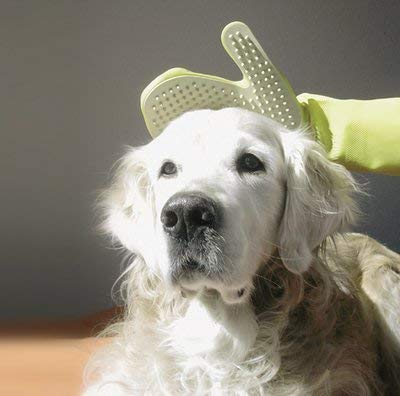 Duramitt Fellpflege, Pflege- Waschhandschuh für Katzen, Hunde, Kleintiere aus Latex mit Massage Noppen US Patent - 2