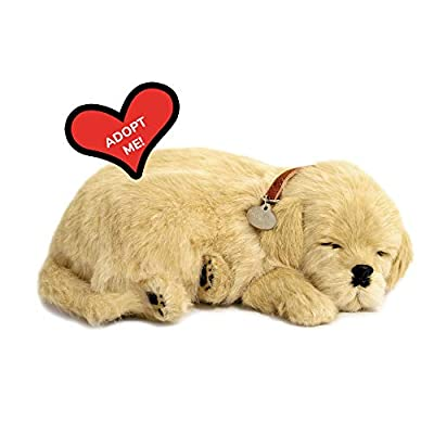 Original Petzzz Golden Retriever, Realistic, Lifelike Stuffed Interactive Pet Toy, Companion Pet Dog with 100% Handcrafted Synthetic Fur – Perfect Petzzz