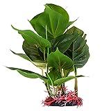 STOBOK Acuario Pecera Plantas Verdes Realista Subacuática Planta de Plástico Decoración de Habitat de Reptil Artificial de Plástico Pecera Plantas Decoración Ornamental