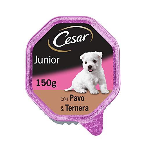 Cesar Tarrina de Comida Húmeda para Perros Cachorros Sabor Pavo (Pack de 14 x 150g)