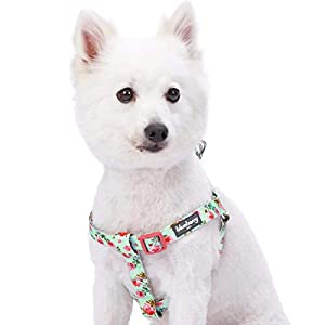 Blueberry Pet 9 Patterns Step-in Spring Scent Inspired Floral Rose Print Turquoise Dog Harness, Chest Girth 26″ – 39″, Large, Adjustable Harnesses for Dogs