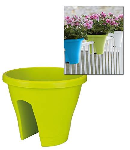 Corsica Flower Bridge® limegrün, 30 cm ø, 1 Topf