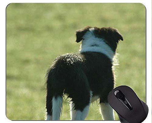 Mausunterlage gedruckt mit Narzissen-australischem Schäferhund, Welpen-die Shetlandinseln-Schäferhund-Mausunterlage mit genähtem Rand