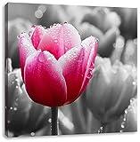 Tulpen im Morgentau schwarz/weiß, Format: 40x40 auf