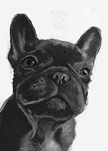 Black French Bulldog Wall Art Decor, Frenchie Puppy Owner Gift, Frenchy Memorial Art, Dog Mom Decor Choice Of Sizes Hand Signed By Dog Portrait Artist Oscar Jetson