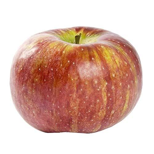 Evaxo Cortland Apple 5 lb bag .#B