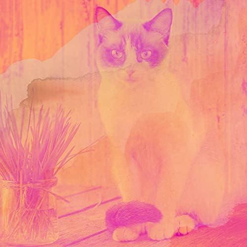 グルーヴィー 猫の音楽