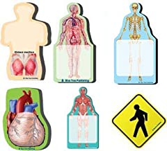Fun Anatomy Sticky Notes Collection, 6 Pack-100 Sheets Per Pack, Medical Note Pads and Great Gifts.