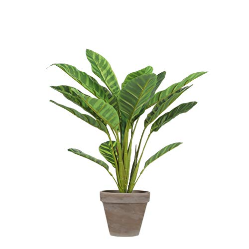 Mica Decorations Calathea – Planta Artificial – Verde Claro – H38 cm