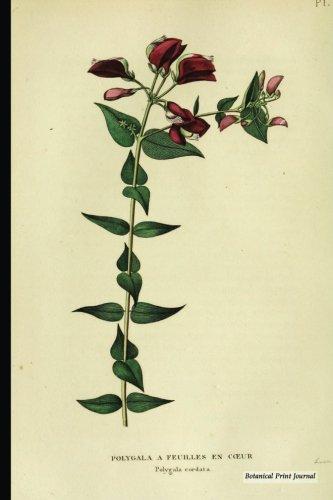 Botanical Print Journal: polygala cordata, 6