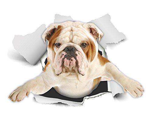 Winston & Bear 3D hond sticker - verpakking van 2 - British Bulldog sticker voor wand, koelkast Engelse buldog
